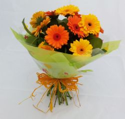 Mixed Gerbera Hand tied